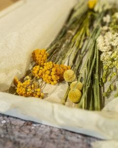 Dried Letterbox Flowers in Yellow