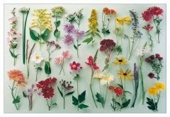 Late Summer Flowers Jigsaw Puzzle