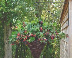 Rubus Black Cascade & Willow Cone Basket