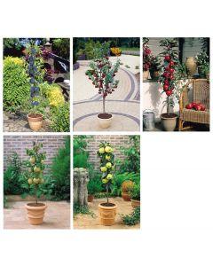 5 Miniature Patio Fruit Trees