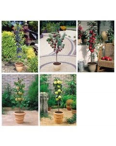 5 Miniature Patio Fruit Trees