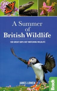 A Summer of British Wildlife