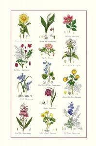 Botanic Garden Cotton Tea Towel