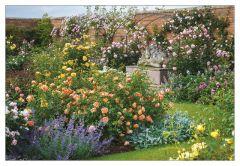 Full Bloom at David Austin Roses Jigsaw Puzzle