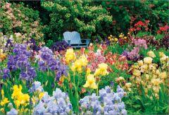 Colourful Iris Garden Jigsaw Puzzle