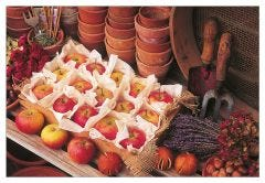 Apples in the Potting Shed Jigsaw Puzzle